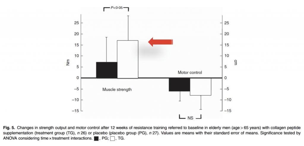 Muskel Studie